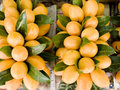 Mayongchid the tropical fruits that are yellow in color and have sweet flavor when ripe Royalty Free Stock Photography