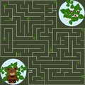 Maze bear and raspberry