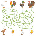 Maze game: help the young find their parents (farm birds: duck, Royalty Free Stock Photo