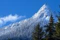 McClellan Butte Snowy Trees Sn...