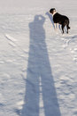 Me and my shadow black white dog on a snow of fotografer Stock Photo