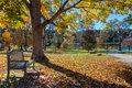 Meadow in autumn park with bench under big tree Royalty Free Stock Photo