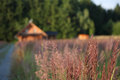 Meadow in background log cabin wood Stock Images