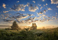The meadow big size panorama with perfect morning on flowers fog and unbelievable sky with clouds Royalty Free Stock Photo