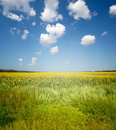 Meadow and blue sky Royalty Free Stock Photography