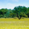 Meadow and blue sky Stock Photography