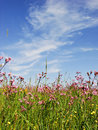 Meadow and blue sky a with red flowers under the skies Stock Photo