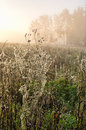 Meadow covered by spider webs Stock Images
