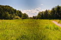 Meadow in Discovery Park Royalty Free Stock Photo