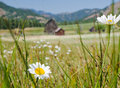 Meadow and farm Royalty Free Stock Image