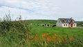 Meadow With Farm Animals