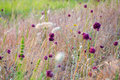 Meadow flowers among the burnt grass before sunset. Pacification mood Royalty Free Stock Photo