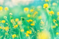 Meadow flowers in grass beautiful nature little yellow Stock Photo