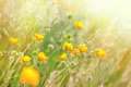 Meadow flowers and grass Royalty Free Stock Photo