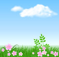 Meadow flowers on the sky background Royalty Free Stock Photo