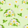 Meadow flowers seamless pattern. Blooming daisies and mint leaves on green background. Vector illustration of wildflowers and herb