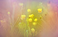 Meadow flowers in spring little yellow close up Royalty Free Stock Photo