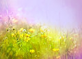 Meadow flowers in spring little yellow and grass Royalty Free Stock Photos
