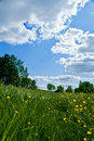 Meadow with fowers and blue sky Royalty Free Stock Photography