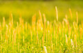 Meadow in front of my house2 Royalty Free Stock Photo