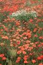 Meadow Full Of Wild Flowers