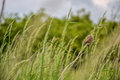 Meadow grass. Blowing wind bend blades of grass in field Royalty Free Stock Photo