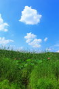 Meadow grass and blue sky with white clouds Royalty Free Stock Photo
