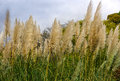 Meadow with grasses in summer Royalty Free Stock Images