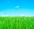 Meadow with a green grass Royalty Free Stock Photography