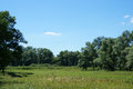 Meadow green grass, green willow trees, reed, blue sky Royalty Free Stock Photo