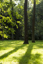 Meadow with green grass and shadows, sun rays, tree trunks, gree Royalty Free Stock Photo