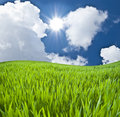 Meadow with a green young grass Stock Images