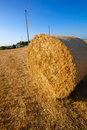 Meadow of hay bales in a late summer afternoon Royalty Free Stock Photo