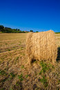 Meadow of hay bales in a late summer afternoon Royalty Free Stock Images