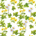 Meadow herbs, flowers, grass. Seamless pattern. Watercolor Royalty Free Stock Photo