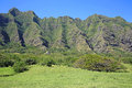 On the meadow of Kualoa Ranch Royalty Free Stock Photo