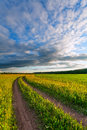 Meadow road evening the rural on a green russia Stock Image