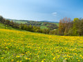 Meadow of spring flowers scenic view rural landscape with blossoming field Royalty Free Stock Image