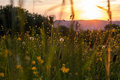 Meadow at sunset the flowers of a lightened up by the soft light of the setting sun Royalty Free Stock Photo