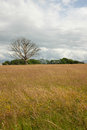 Meadow tree flowering plants and grasses on a with an old dead oak in the distance Royalty Free Stock Images