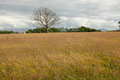 Meadow tree flowering plants and grasses on a with an old dead oak in the distance Royalty Free Stock Photos