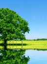 Meadow, Tree and Lake Royalty Free Stock Photo