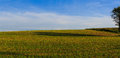 Meadow with tree shadow in farmland area daytime summer Royalty Free Stock Photo