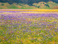 Meadow Wildflowers and Mountains Royalty Free Stock Photo