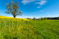 Meadows and trees flowering tree surrounded by sloping switzerland Stock Photos