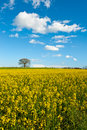 Meadows of Tuscany Royalty Free Stock Photos
