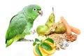 Mealy amazon parrot eating on white amazona farinosa of a background Stock Photos
