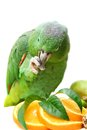 Mealy amazon parrot eating on white amazona farinosa of a background Royalty Free Stock Photos