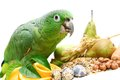 Mealy amazon parrot eating on white amazona farinosa of a background Stock Photo