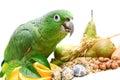 Mealy amazon parrot eating on white amazona farinosa of a background Stock Photo